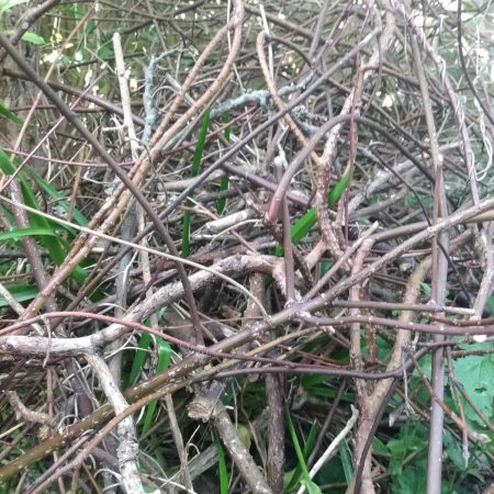 Image of tangled hedge illustrating the Fairisle article Dealing with business problems